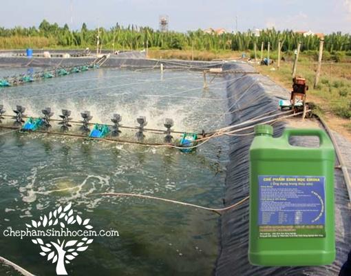 Chế phẩm Emina trong nuôi trồng thủy sản